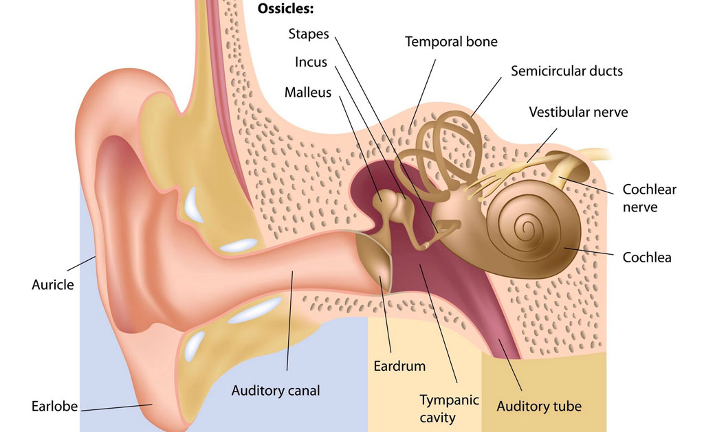 Diagnosis of middle ear disorders using wideband energy