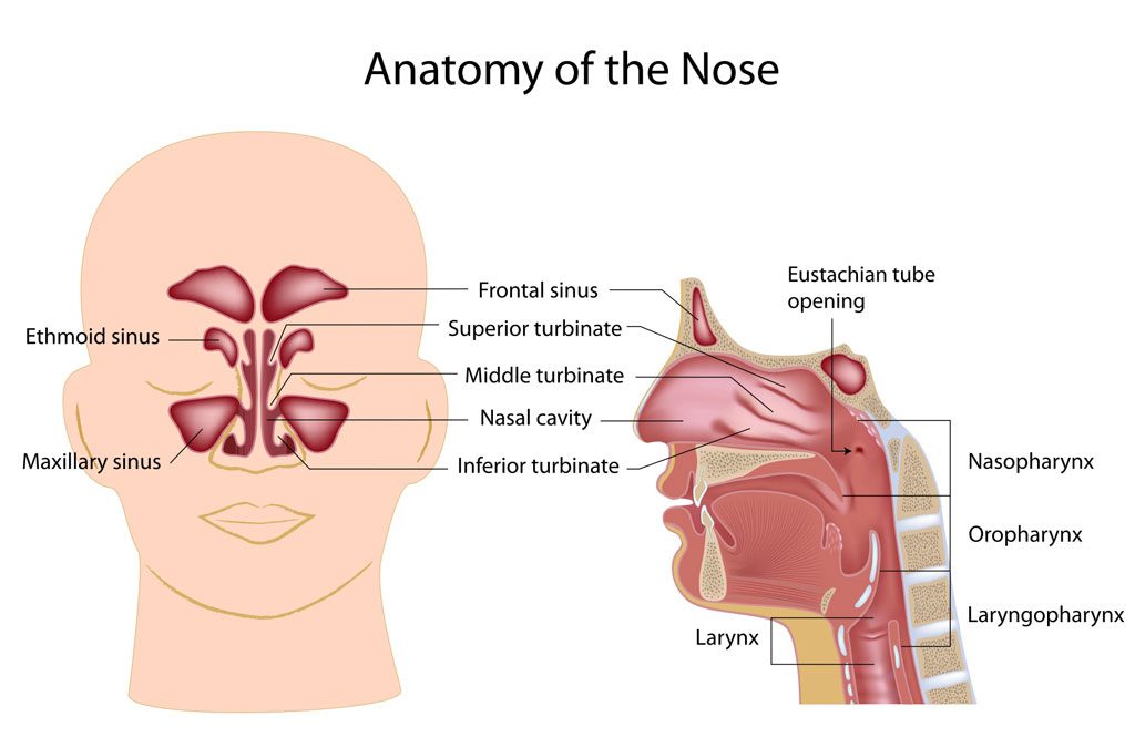 Sinus Disease - Fort Worth ENT & Sinus