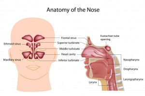 Ear, Nose, Throat, and Sinus disorders treated at Fort Worth ENT